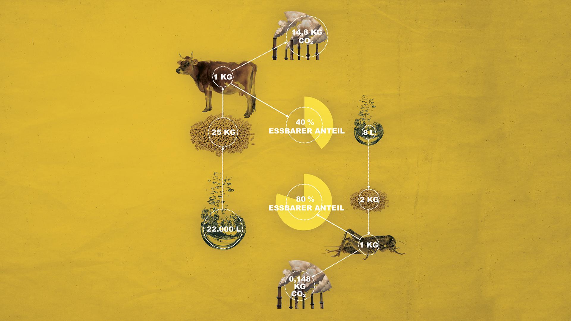 Informationsgrafik dass die Insektenzucht wirtschaftlich ist.